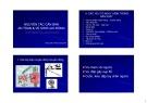 Bài giảng Nguyên tắc căn bản và vệ sinh an toàn lao động - Phạm Công Tồn