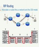 Tài liệu hướng dẫn thực hành CCNA: Bài 13 - Rip (Routing Information Protocol)