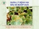 Chương trình huấn luyện nông dân sản xuất và xây dựng mô hình rau an toàn theo hướng GAP: Quản lý bệnh hại bầu bí mướp dưa