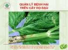 Chương trình huấn luyện nông dân sản xuất và xây dựng mô hình rau an toàn theo hướng GAP: Quản lý bệnh hại trên cây họ đậu