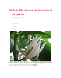 Bài thuốc chữa viêm xoang cực hiệu nghiệm từ hoa ngọc lan