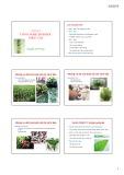Bài giảng Chương 4: Công nghệ sinh học thực vật