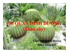 Bài giảng Thực vật và phân loại thực vật - Chương 3: Cơ quan dinh dưỡng (Thân cây)