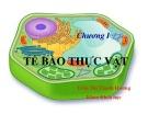 Bài giảng Thực vật và phân loại thực vật - Chương 1: Tế bào thực vật