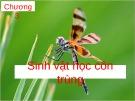 Bài giảng Chương 3: Sinh vật học côn trùng