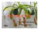Bài giảng Thực vật và phân loại thực vật - Chương 2: Mô thực vật