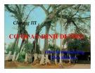 Bài giảng Thực vật và phân loại thực vật - Chương 3: Cơ quan dinh dưỡng (Rễ cây)