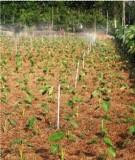 Phân tích các yếu tố xác định hệ thống canh tác giúp hỗ trợ trong đánh giá sử dụng đất đai