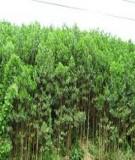 Nghiên cứu, đánh giá thực trạng và đề xuất giải pháp nâng cao hiệu quả rừng trồng sản xuất khu vực miền núi phía Bắc