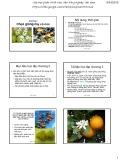 Bài giảng Chọn giống cây trồng dài ngày - Chương 2: Chọn giống cây có múi (2015)