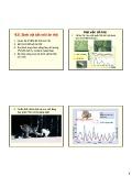 Bài giảng Bảo vệ rừng tổng hợp: Chương 6 - GS.TS. Nguyễn Thế Nhã (tt)