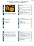 Bài giảng Di truyền ứng dụng: Chương 4 - Ngô Thị Hồng Tươi