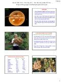 Bài giảng Chọn giống cây trồng dài ngày - Chương 3: Chọn giống nhãn