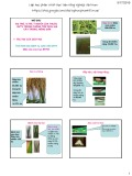 Bài giảng Thuốc bảo vệ thực vật - Vị trí, vai trò, ý nghĩa của thuốc bảo vệ thực vật trong phòng trừ dịch hại cây trồng, nông sản