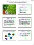 Bài giảng chuyên đề: Quy trình sản xuất cây rau mầm