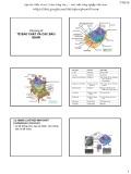 Bài giảng Tế bào học thực vật: Chương 3 - Phạm Thị Ngọc