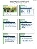 Bài giảng Chọn giống cây trồng dài ngày - Chương 4: Chọn giống cà phê (2015)