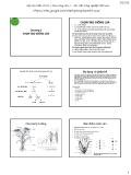 Bài giảng Chọn giống cây trồng ngắn ngày - Chương 2: Chọn tạo giống lúa