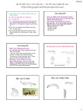 Bài giảng Côn trùng đại cương 1 - Chương 3: Sinh vật học côn trùng (tt)
