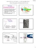 Bài giảng Côn trùng đại cương 1 - Chương 2: Phần ngực