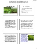Bài giảng Chọn giống cây trồng dài ngày - Chương 3: Chọn giống chè cành (2015)