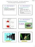 Bài giảng Côn trùng đại cương 1 - Chương 2: Hình thái học côn trùng