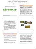 Bài giảng Chọn giống cây trồng dài ngày - Chương 8: Chọn giống cây cao su (2015)