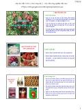 Bài giảng Chọn giống cây trồng dài ngày - Chương 4: Chọn giống vải