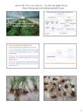 Bài giảng Sản xuất giống và công nghệ hạt giống: Chương 9 - Học viện Nông nghiệp Việt Nam