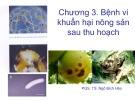 Bài giảng Vi sinh vật hại nông sản sau thu hoạch: Chương 3 - PGS.TS. Ngô Bích Hảo