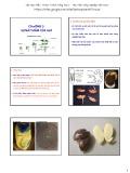 Bài giảng Sản xuất giống và công nghệ hạt giống: Chương 3 - Học viện Nông nghiệp Việt Nam
