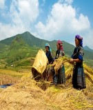 Một số vấn đề về vốn xã hội trong cộng đồng các dân tộc thiểu số Việt Nam