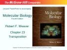 Lecture Molecular biology: Chapter 23 - Robert F. Weaver