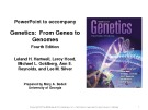 Lecture Genetics: From genes to genomes - Chapter 8: Gene expression: The flow of information from DNA to RNA to protein