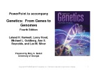 Lecture Genetics: From genes to genomes - Chapter 12: The Eukaryotic chromosome