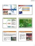 Bài giảng Viễn thám - Chương 4: Kỹ thuật xử lý ảnh vệ tinh