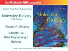 Lecture Molecular biology (Fifth Edition): Chapter 14 - Robert F. Weaver