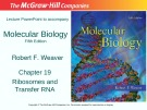 Lecture Molecular biology (Fifth Edition): Chapter 19 - Robert F. Weaver