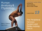 Lecture Human anatomy and physiology - Chapter 13: The peripheral nervous system and reflex activity (part a)