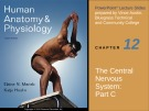 Lecture Human anatomy and physiology - Chapter 12: The central nervous system (part c)