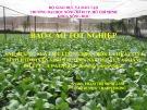 Báo cáo tốt nghiệp: Ảnh hưởng của liều lượng phân bón lá hữa cơ vi sinh HTD-04 lên sinh trưởng, năng suất và phẩm chất của cải ngọt (Brassica integerifolia)