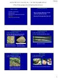 Bài giảng Bệnh cây đại cương: Bài 8 - Học viện Nông nghiệp Việt Nam