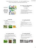Bài giảng Cây ăn quả 1: Chương 3 - Học viện Nông nghiệp Việt Nam