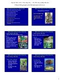 Bài giảng Bệnh cây đại cương: Bài 6 - Học viện Nông nghiệp Việt Nam
