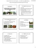 Bài giảng Cây ăn quả 1: Chương 4 - Học viện Nông nghiệp Việt Nam