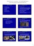 Bài giảng Bệnh cây đại cương: Bài 4 - Học viện Nông nghiệp Việt Nam