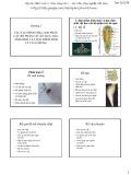 Bài giảng Cây ăn quả 1: Chương 2 - Học viện Nông nghiệp Việt Nam