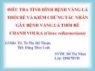 Báo cáo tốt nghiệp: Điều tra tình hình bệnh vàng lá thối rễ và kiểm chứng tác nhân gây bệnh vàng lá thối rễ chanh Volka (Citrus volkarmeriana)
