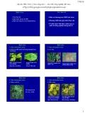 Bài giảng Bệnh cây đại cương: Bài 7 - Học viện Nông nghiệp Việt Nam