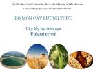 Bài giảng Cây lấy hạt trên cạn: Cây ngô